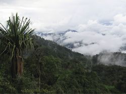 Rainforest in the Aseki district