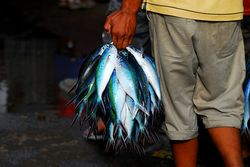 Fish Trader, Port Moresby