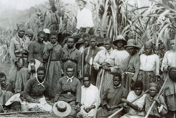 Indentured labourers in Queensland