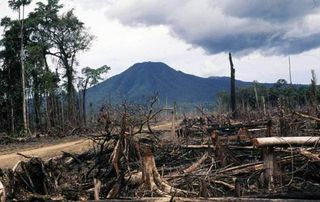 Deforestation in PNG