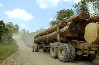 A truck hauls timber from a forest in Papua New Guinea