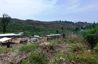 Lattas - Clear felled hills planted with oil palms