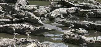 Moitaka Crocodile Farm