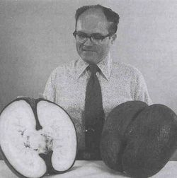 The largest seeds on the planet, coco-de-mer