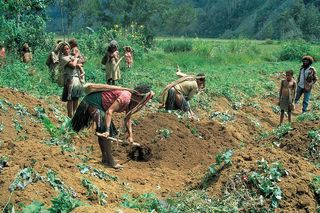 Farming in the PNG highlands