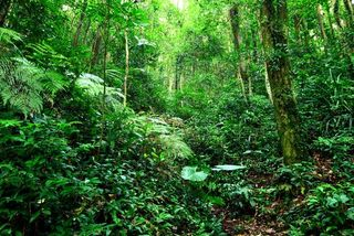Jungle in PNG near where remains were found