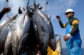 Pacific tuna fishing industry struggles with international competition