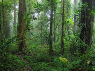 Forests-papua-new-guinea