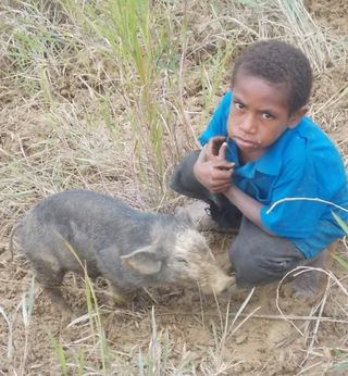 Child and piglet