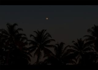 Coconut palms and moonlight