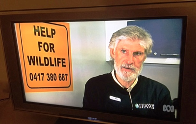 Howie today - serious  concerned  devoted to our native wildlife