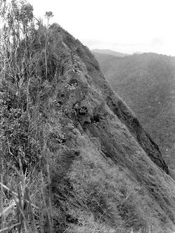 Troops bring ammunition to Shaggy Ridge, 22 January 1944. Ramu Valley is in the background [AWM]