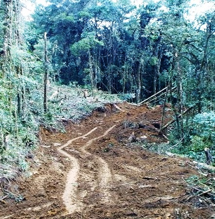 Building the road to Karimui