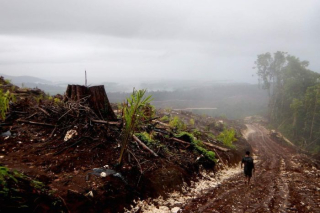 Land cleared for oil palm at Bairaman  near Pomio