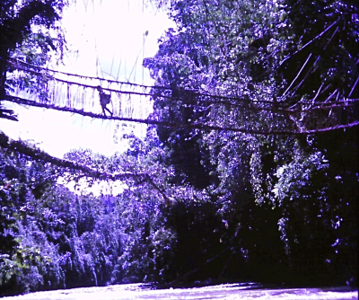 Cane bridge over the Tsau river
