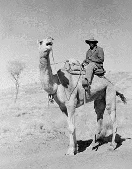 Dogger on his camel