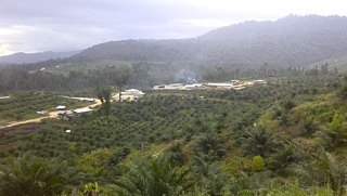 New oil palm planting and mill in Pomio District  ENBP