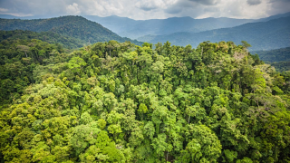 PNG pristine forest