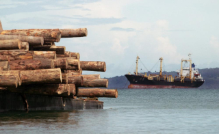 Taking on the logging pirates