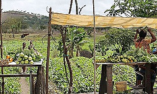 Women are a prominent force in PNG agriculture (Johnny Blades)