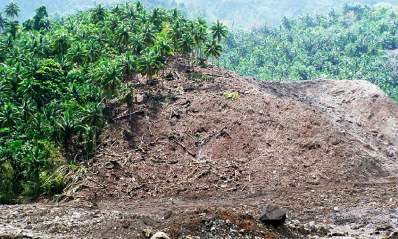 Knocked-down-coconut-trees