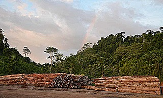 Logging at the Pohowa project (Ed Davey  Global Witness)