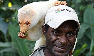 Cuscus and handler at Port Moresby Nature Park